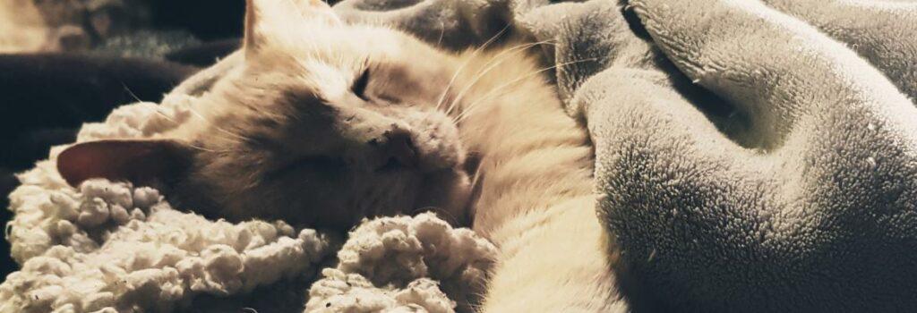 Fortaleciendo Sistema Inmune de Perros y Gatos. Ebook Gratuito.